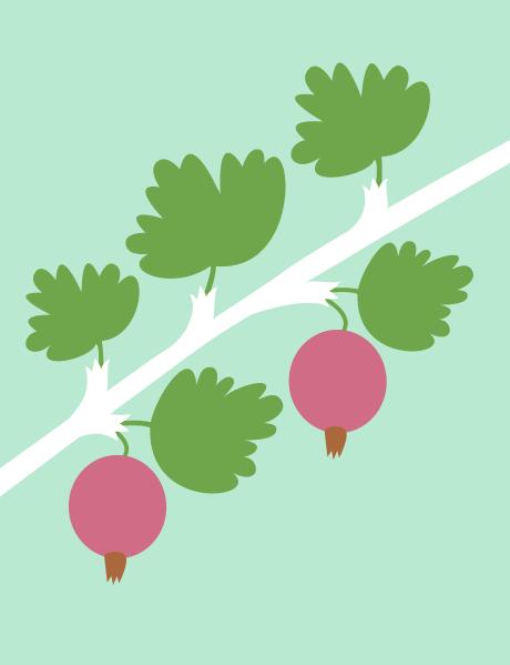 berries_1_2014_jastren